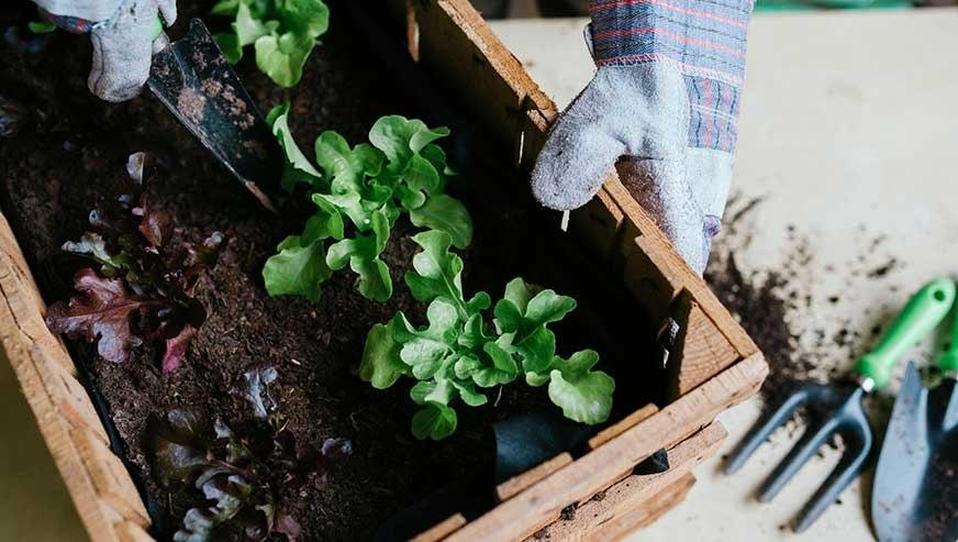 گل کاری و سبزی کاری